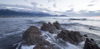 NZ coast risen earthquake