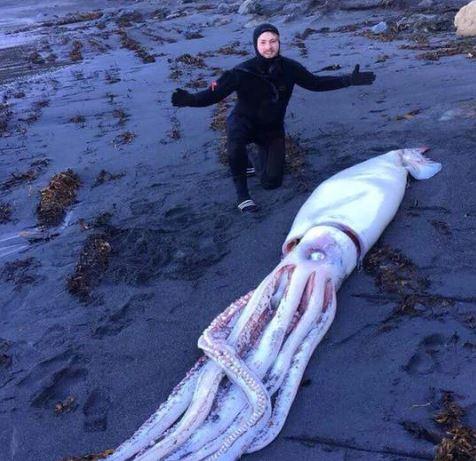 giant squid beach nz