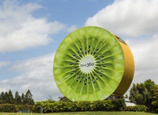 nz kiwifruit